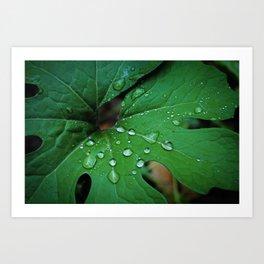 Bloodroot & Raindrops Botanical Fine Art Print, Nature Art, Texture Art Print