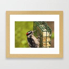 Woodpecker - Bird - Wild Life Framed Art Print