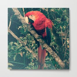 Costa Rican Parrot Metal Print