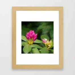 Rhododendron II Framed Art Print