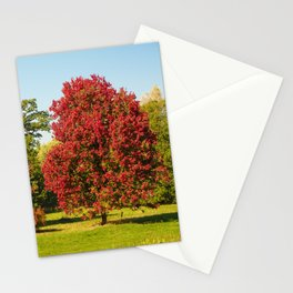 October Glory maple trees Stationery Cards