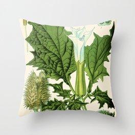 Datura stramonium (thorn apple - jimson weed or devil s snare) - Vintage botanical illustration Throw Pillow