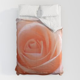 Beautiful peach rose Comforters
