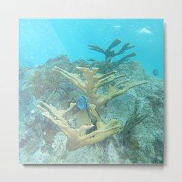 Watercolor Sealife, Elkhorn Coral 02, St John, USVI Metal Print