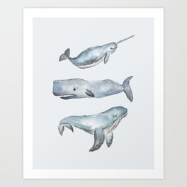 Narwhal, Sperm Whale & Humpback Whale Art Print