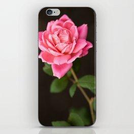 pink rose iPhone Skin