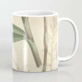 Epidendrum xanthinum Curtis' 124 (Ser. 3 no. 54) pl 7586 (1898) Coffee Mug