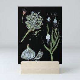 Garlic drawing black background Mini Art Print