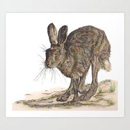 Hare II Art Print