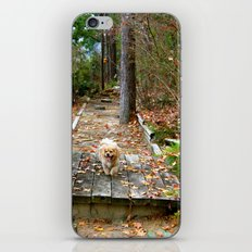 Autumn Stroll iPhone & iPod Skin