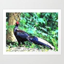 Swinhoe's pheasant Art Print