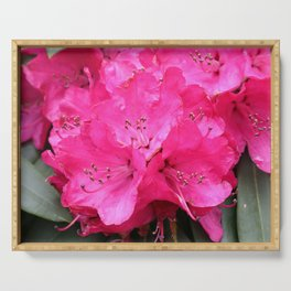 Rhododendron Pink Blooms Serving Tray