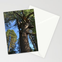 Tree at Kubota Garden in Seattle Stationery Cards