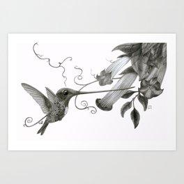 Swordbill Hummingbird Art Print