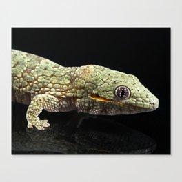 Eurydactylodes agricolae Gecko Canvas Print