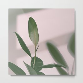 01#Ficus Elastica#light&shadow Metal Print