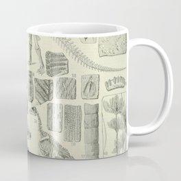Fossil Chart Coffee Mug