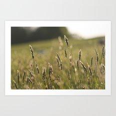 Meadow (Colour) Art Print