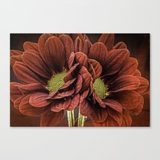 Red Chrysanthemum Duo Canvas Print
