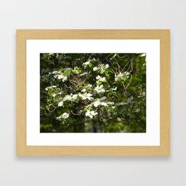 Dogwood Tree in Spring Framed Art Print