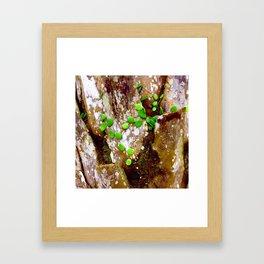 Tree Trunk Framed Art Print