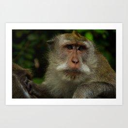 Monkey at the Ubud Monkey Forest Art Print