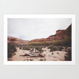Spring in the Desert Art Print