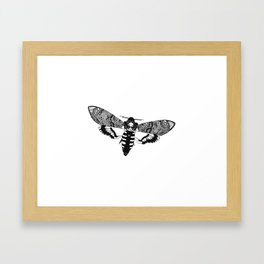 Deaths Head Moth Framed Art Print