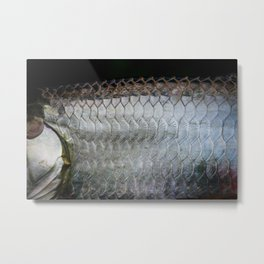 Tarpon Scales Metal Print