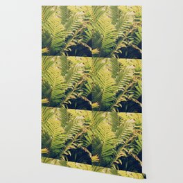 Botanical Garden Ferns Wallpaper