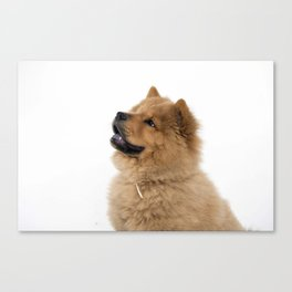 Chow Chow other profile Canvas Print