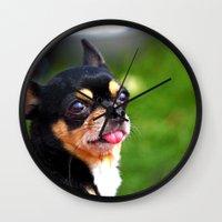 chihuahua Wall Clocks featuring Chihuahua by Doug McRae