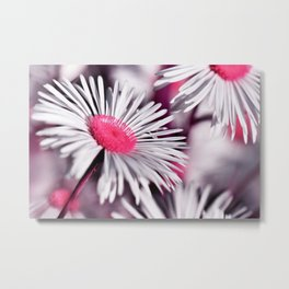 Marquerite white pink 01 Metal Print