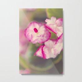 Begonia Gum Drop Metal Print