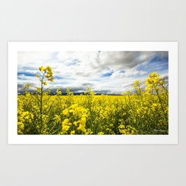 Fields of yellow - Floral Photography #Society6 Art Print