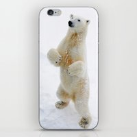 polar bear iPhone & iPod Skins featuring Polar Bear by MVision Photography