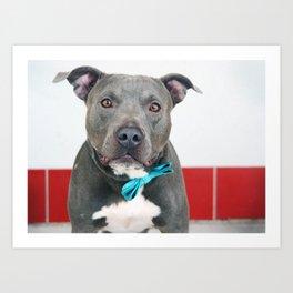 Handsome Blue Pitbull Art Print