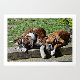Pair of Boxers Art Print