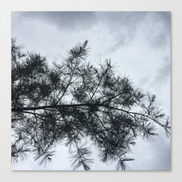 Pine in the Sky Canvas Print