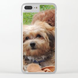 Copper the Havapookie as a Puppy Clear iPhone Case