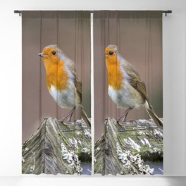 European Robin Blackout Curtain