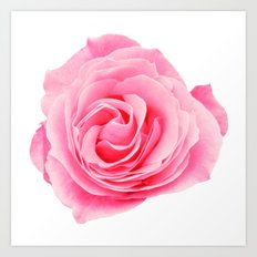 Swirly Petals Pink Rose Art Print