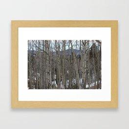 Aspen 2# Framed Art Print