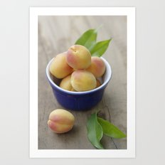 Apricots fresh from the tree Art Print