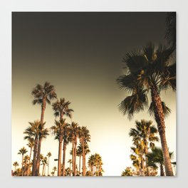 los angeles palms Canvas Print