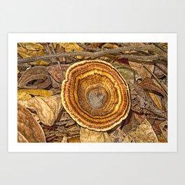 Bracket Fungi on the forest floor Art Print