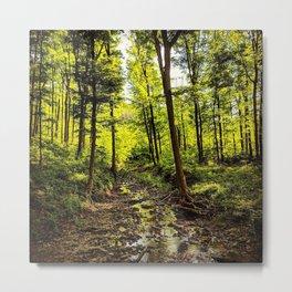 Sunlit Brook Flowing Through Illuminated Forest Metal Print