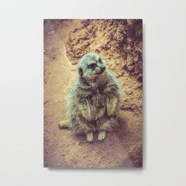Furry Meerkat Sitting Watching Lincoln Park Zoo Chicago Metal Print