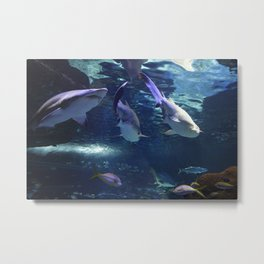 Shark Party Metal Print