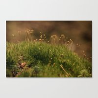 moss Canvas Prints featuring Moss by A Wandering Soul